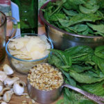 Basil Pesto Recipe - loads of fresh basil from the garden