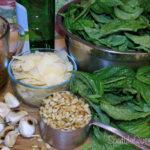 Basil Pesto Recipe - loads of fresh basil from the garden