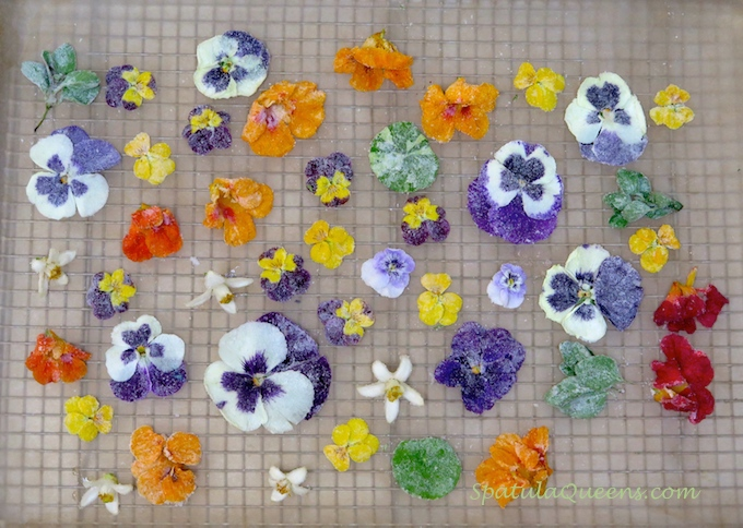 Pretty, edible, candied flowers - drying