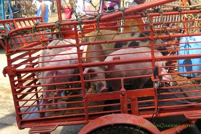 Livestock sale Malatapay Market